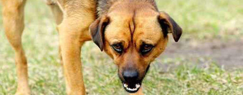 Von «Hundeflüsterern» und deren Marktstrategie