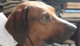 Mit dem Velo und Hunden um die Welt, Teil 11