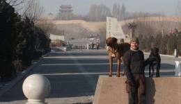 Mit dem Velo und Hunden um die Welt, Teil 13