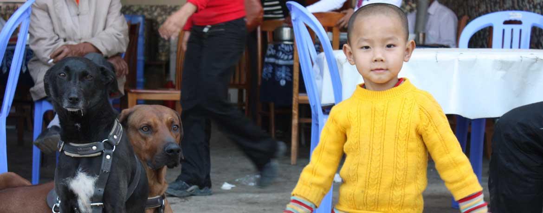Mit dem Velo und Hunden um die Welt, Teil 14