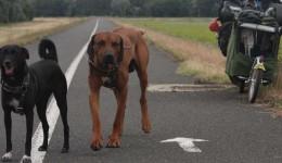 Mit dem Velo und Hunden um die Welt, Teil 2