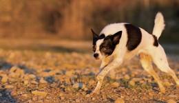 Rassentypisches Verhalten Kleinhunde