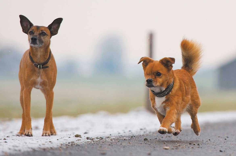 hund wirkt apathisch