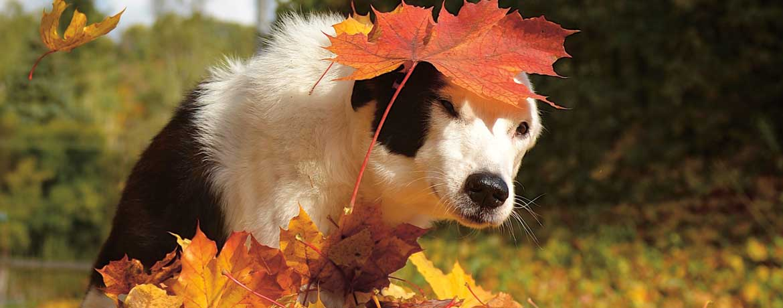 Der «Canis autisticus» - Gibt es Autismus bei Hunden?