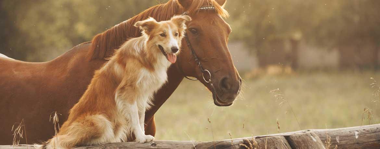 Gesellschaftstaugliche Hunde – hundetaugliche Gesellschaft