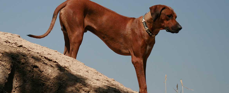 Mit dem Velo und Hunden um die Welt, Teil 28