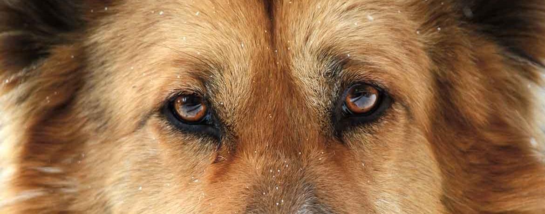 Neuropsychologie beim Hund