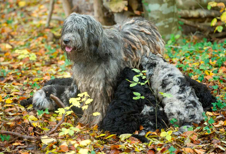 wach und schutzhunde