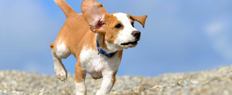 Einflüsse auf Hundewelpen
