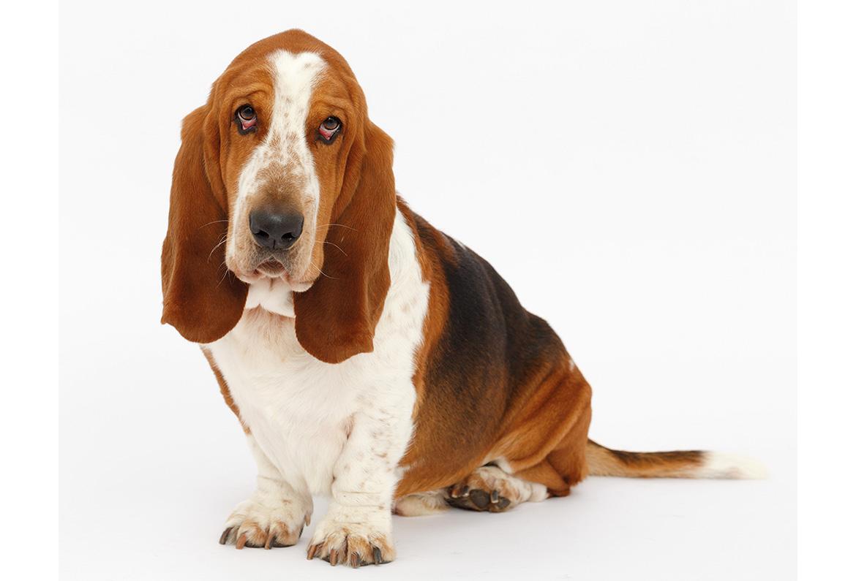 überzüchtete hunderassen liste