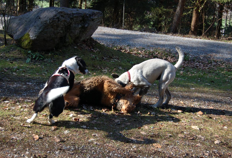 beruhigung hund silvester