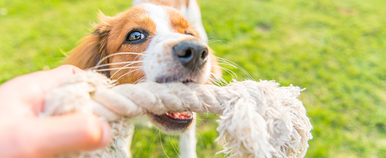 Spielen mit dem Hund